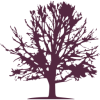 family tree finder tree icon